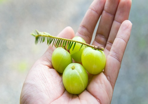 Benefits Of Indian Gooseberry For The Health