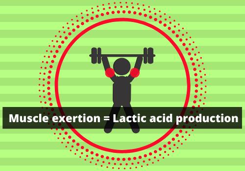 Prevent Lactic Acid Buildup-Exercise, Rest, Eat, Repeat