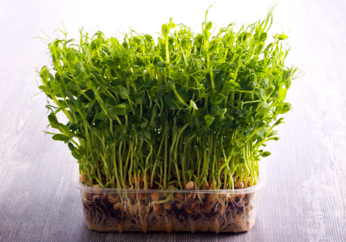 Microgreens- For Better Health