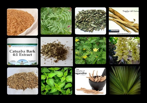 Top Twelve Herbs To Boost Men's Health
